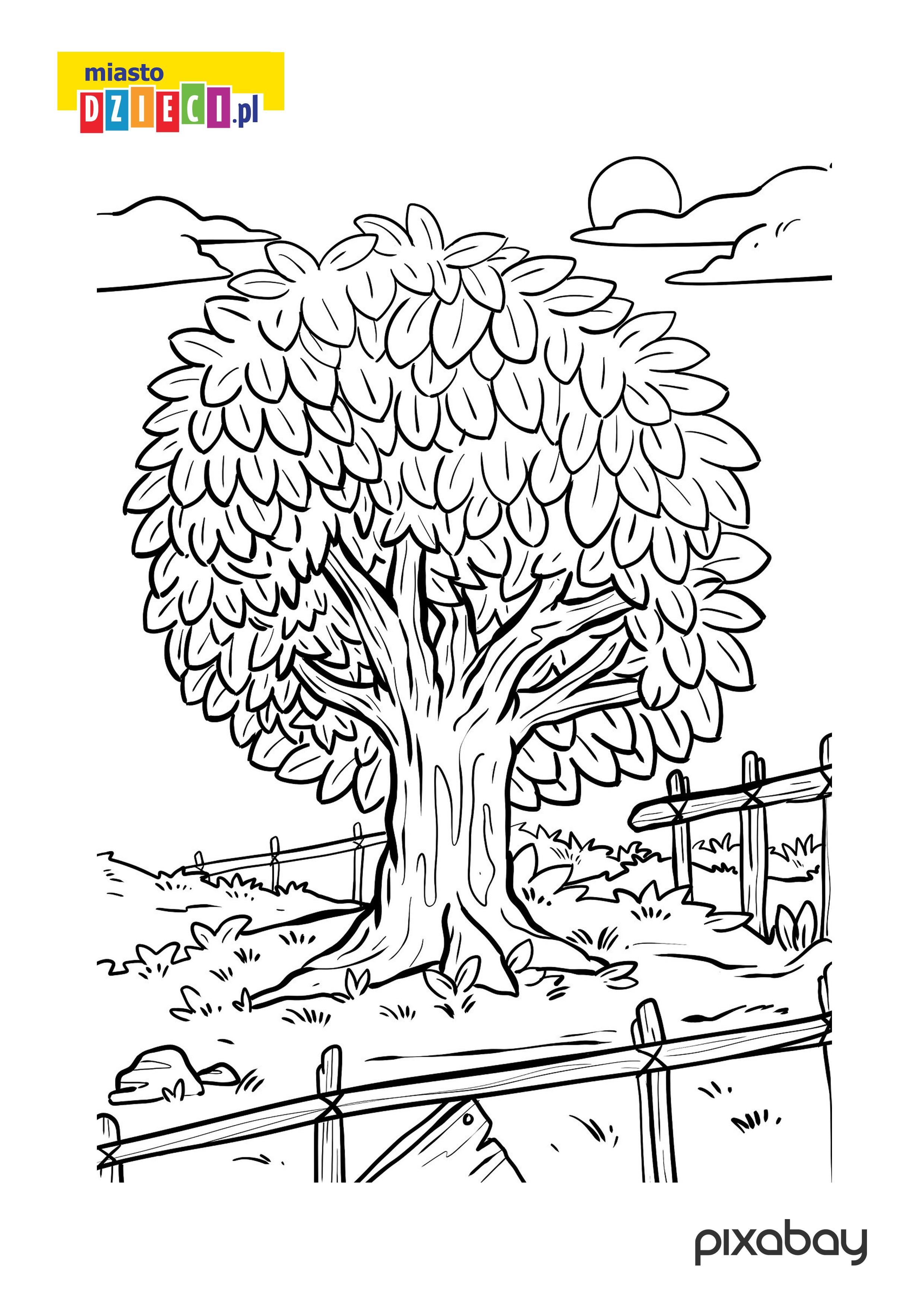 wielkie drzewo - kolorowanka do pobrania