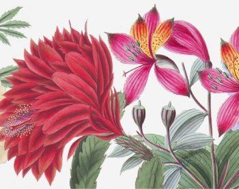 W jakim języku mówią kwiaty? Warsztaty plastyczne dla dzieci LIVE