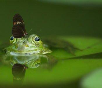 Wierszyk dla dzieci o żabce wiersze i piosenki o zwierzętach