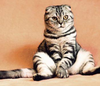 Koty - test wiedzy o kotach