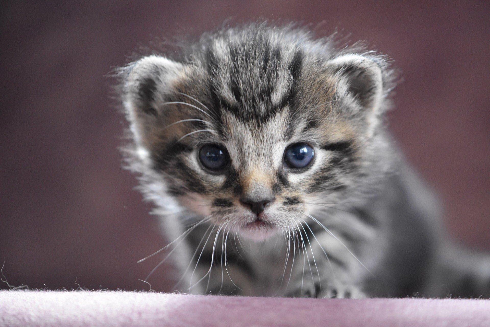 darmowy quiz o zwierzętach dla maluszków