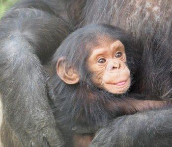 Quiz o zwierzętach dla maluszków. Dzieci zwierząt - darmowe quizy z odpowiedziami