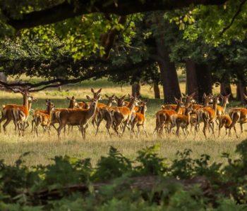 Zwierzęta leśne - quiz