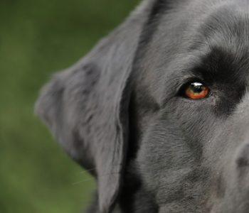 Psy - test wiedzy o psach