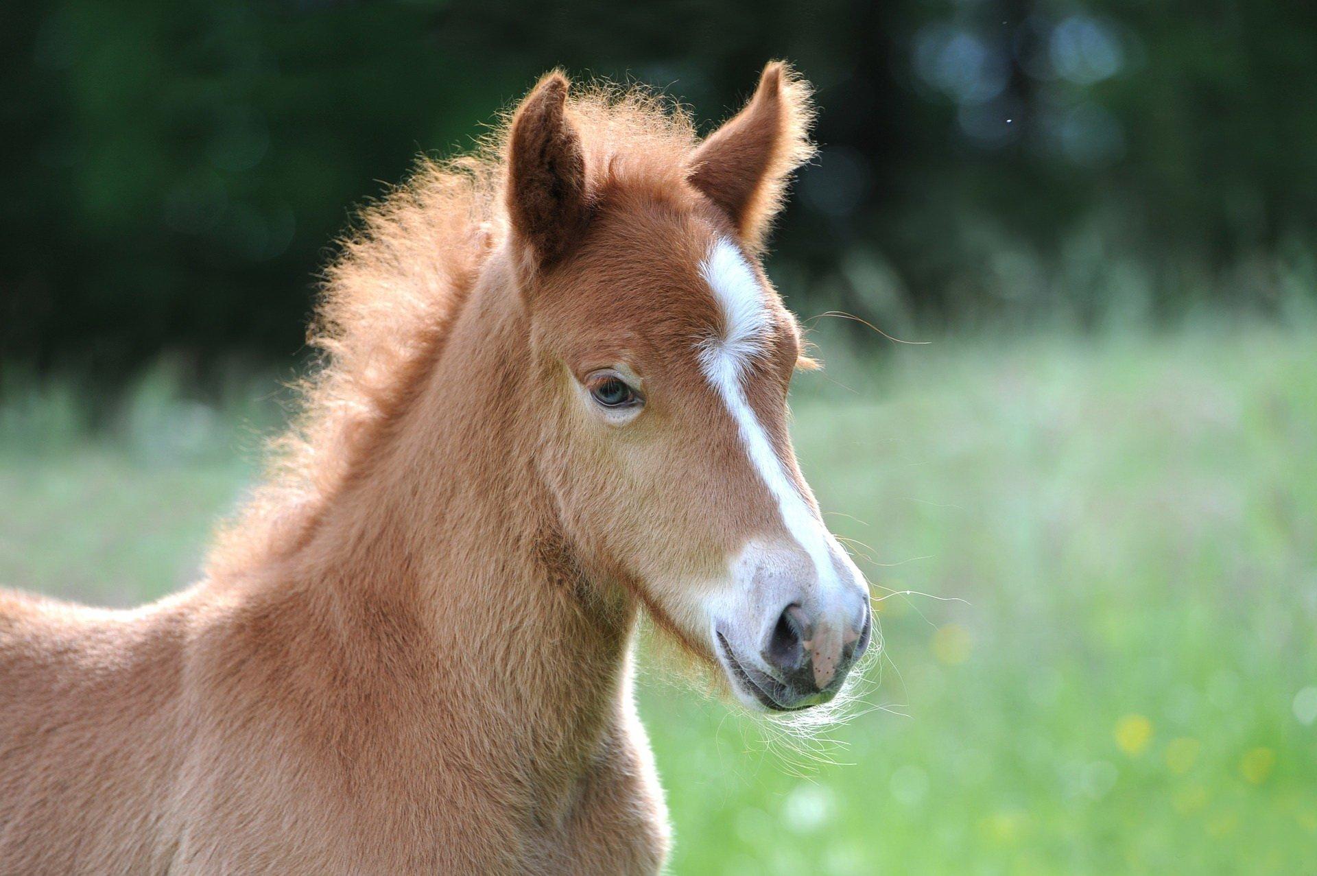 quiz darmowy o zwierzętach, testy dla dzieci z odpowiedziami