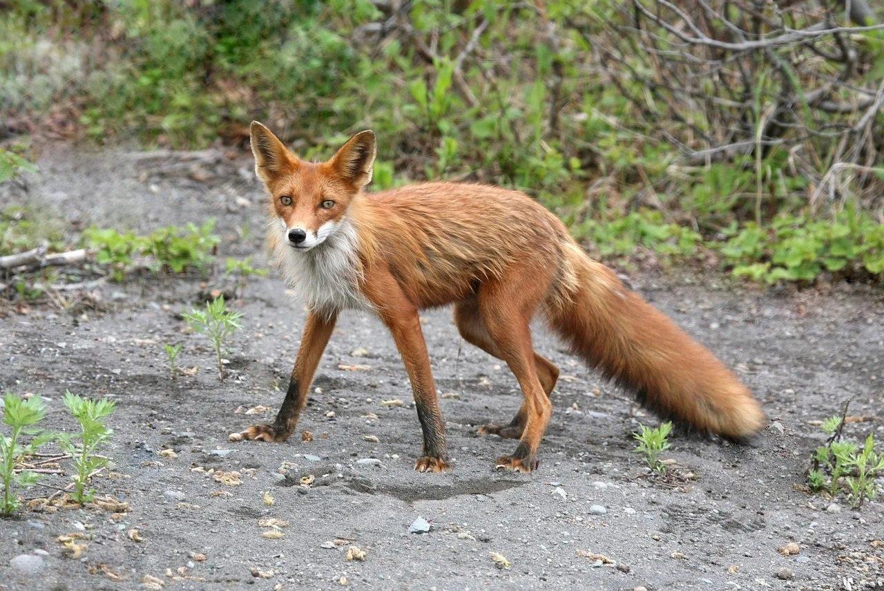 Jakie to zwierzę? Quiz obrazkowy