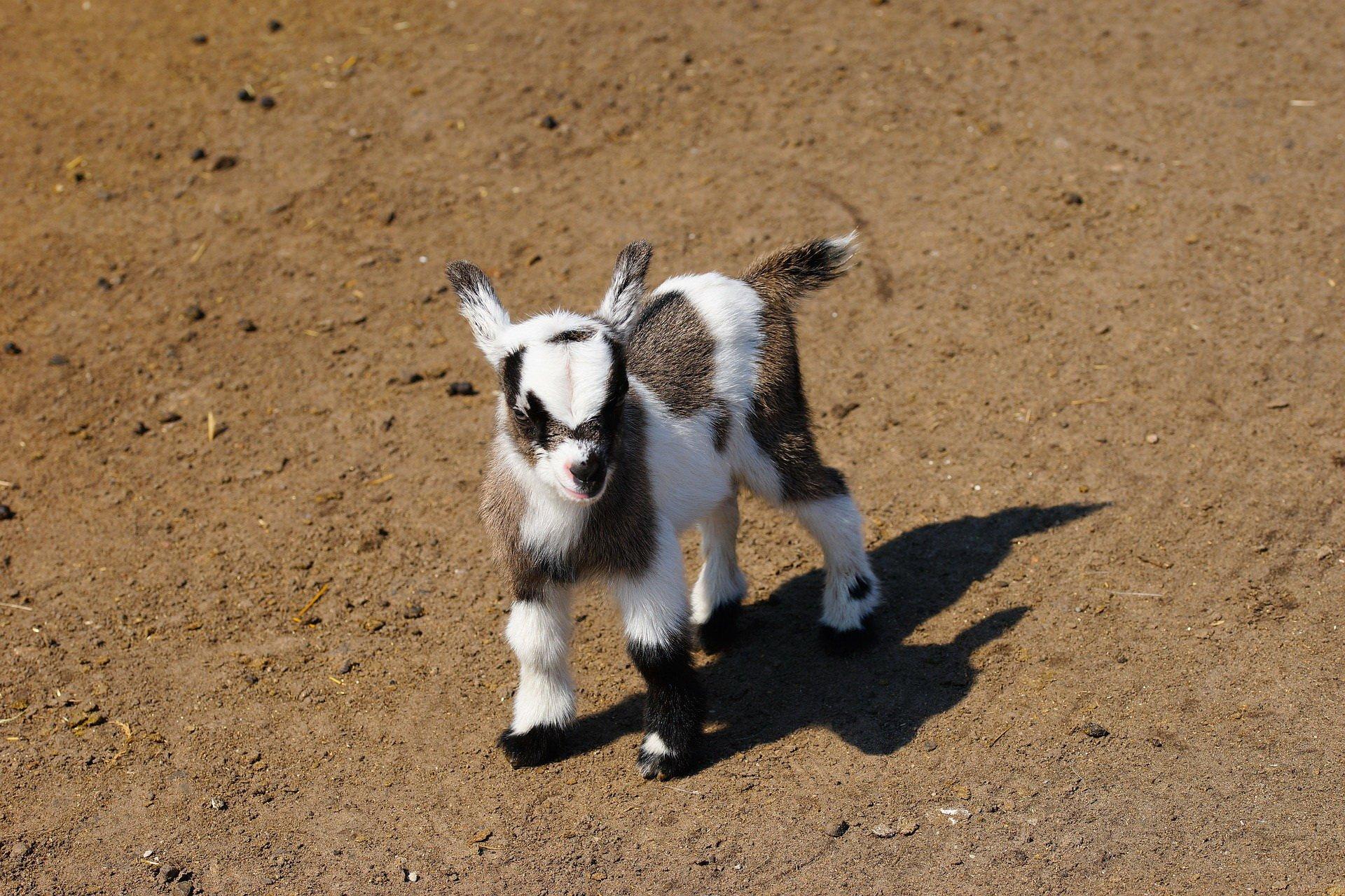 quizy obrazkowe dla dzieci zwierzęta, darmowe quizy z odpowiedziami