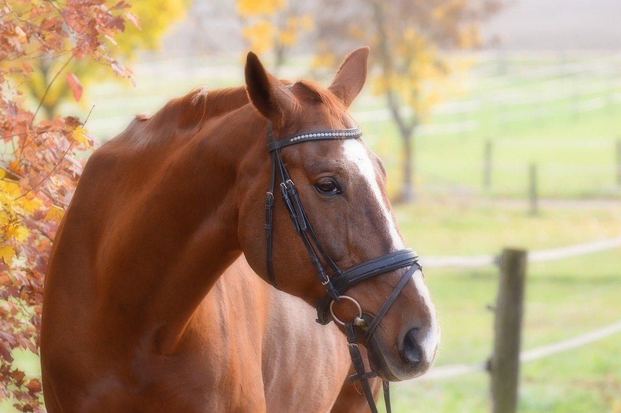 Quiz o koniach