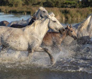 Konie - test wiedzy o koniach