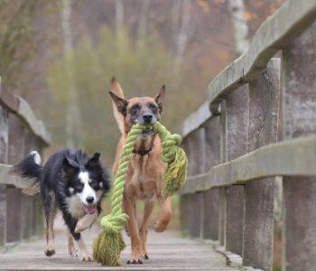 Rasy psów - test wiedzy o psach