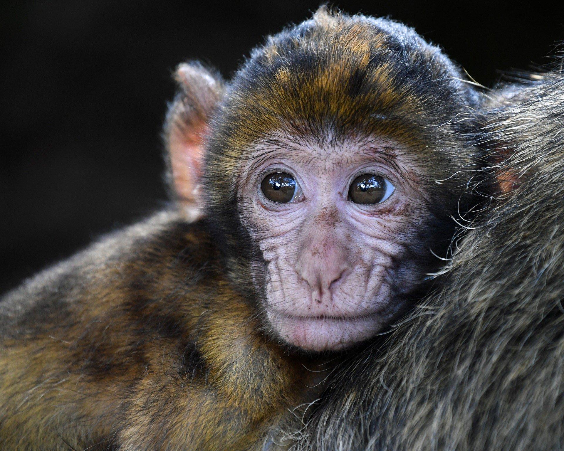 quiz obrazkowy dzieci zwierząt z odpowiedziami
