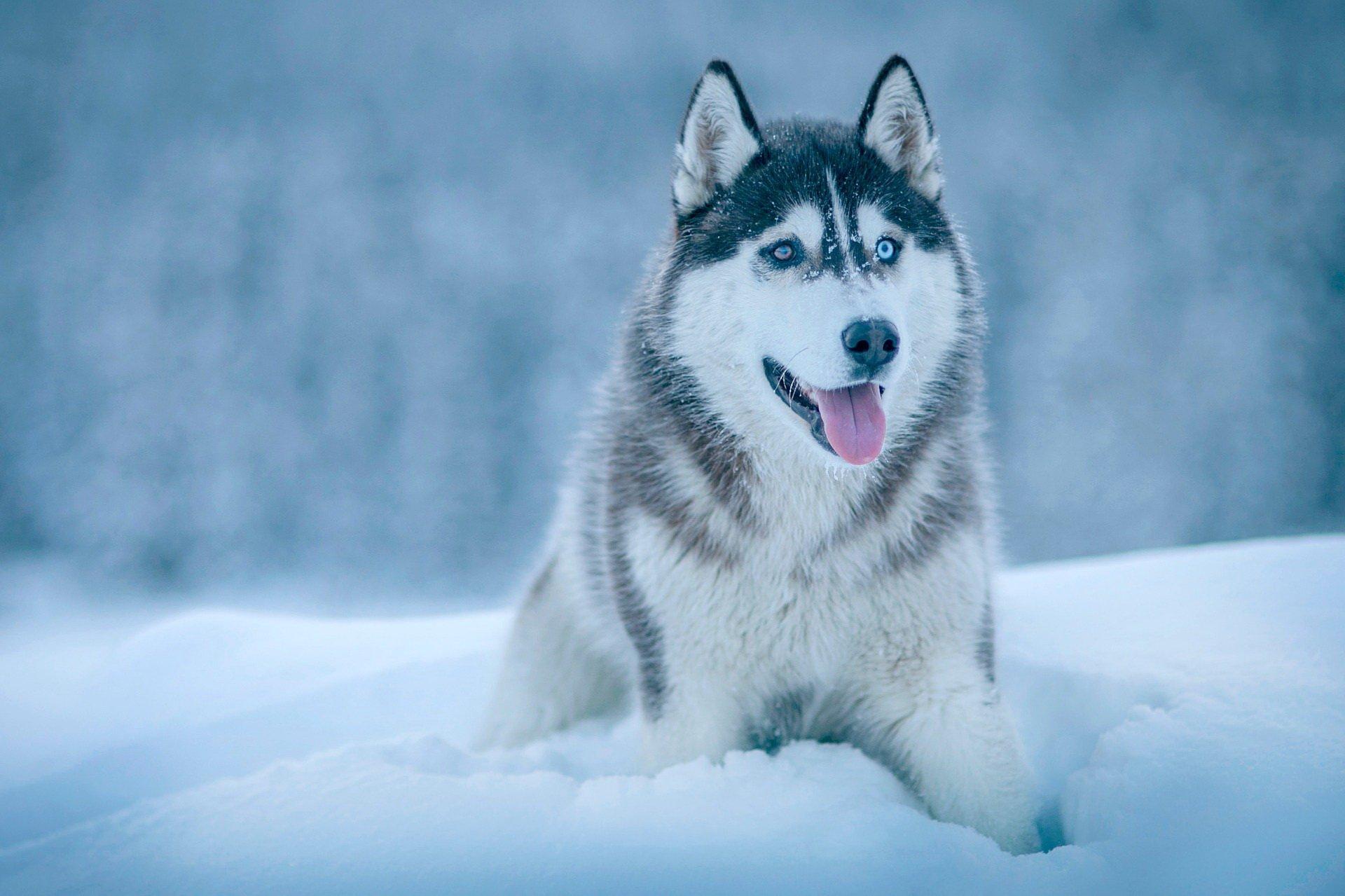 Quiz rasy psów test o psach dla dzieci