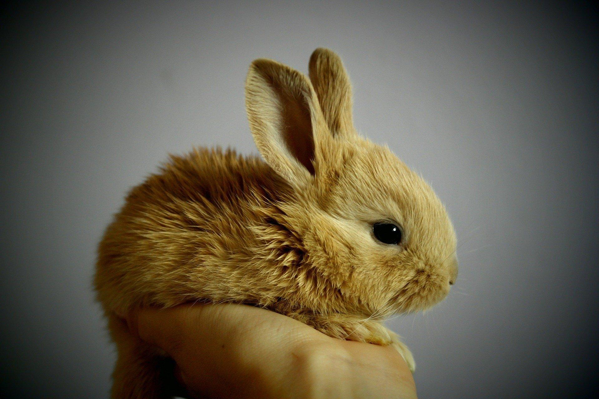 obrazkowe quizy dla małych dzieci zwierzęta