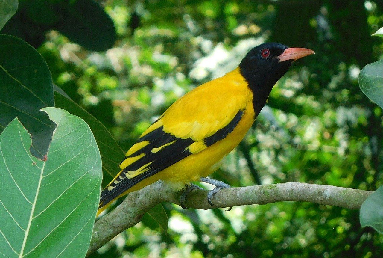 Zwierzęta chronione - quiz. Jak nazywa się ten będący pod ochroną ptak?