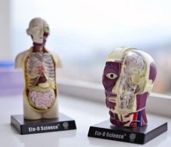 Jaki to narząd? – quiz