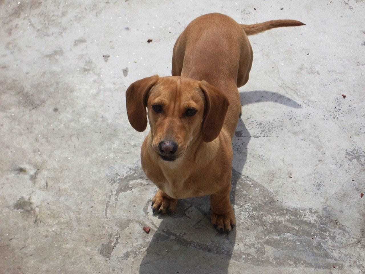 Zwierzęta domowe - quiz. Jaka to rasa psa?