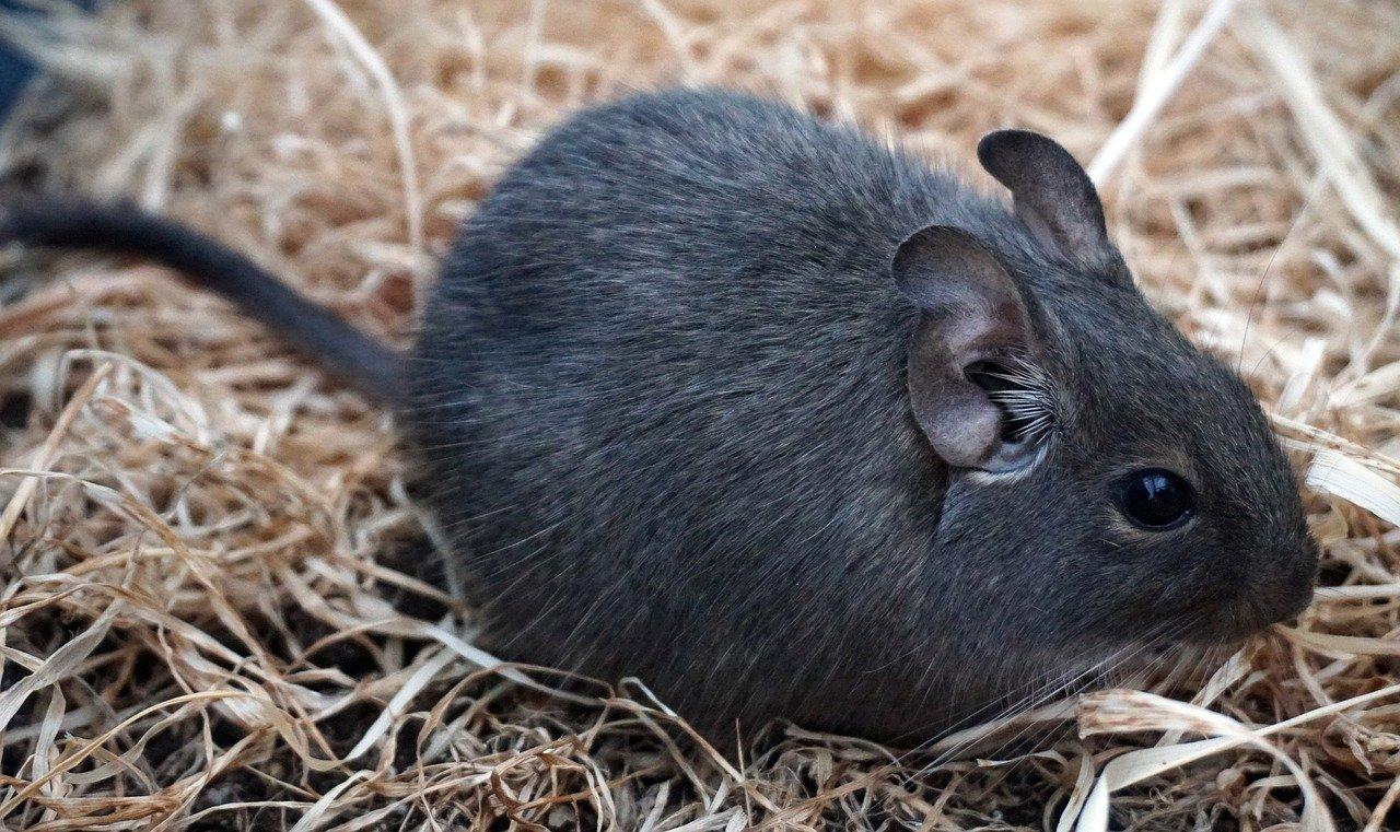 Zwierzęta domowe - quiz. Jakie to zwierzę?