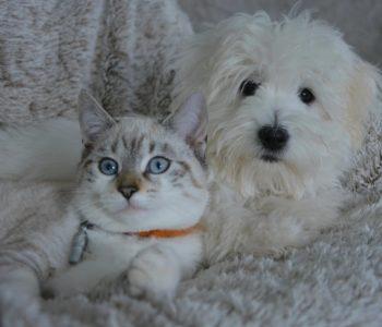 Zwierzęta domowe - quiz