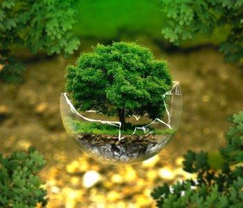 Quiz o drzewach i krzewach