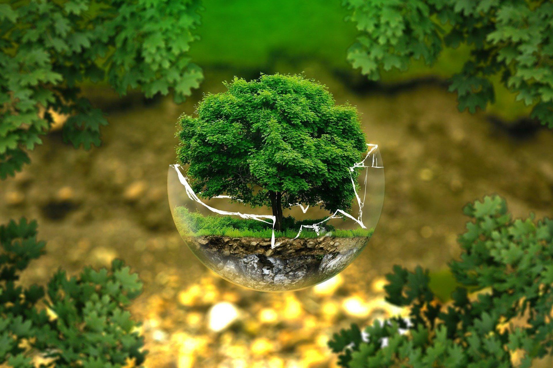 Quiz o drzewach i krzewach dla dzieci. Darmowe quizy z odpowiedziami