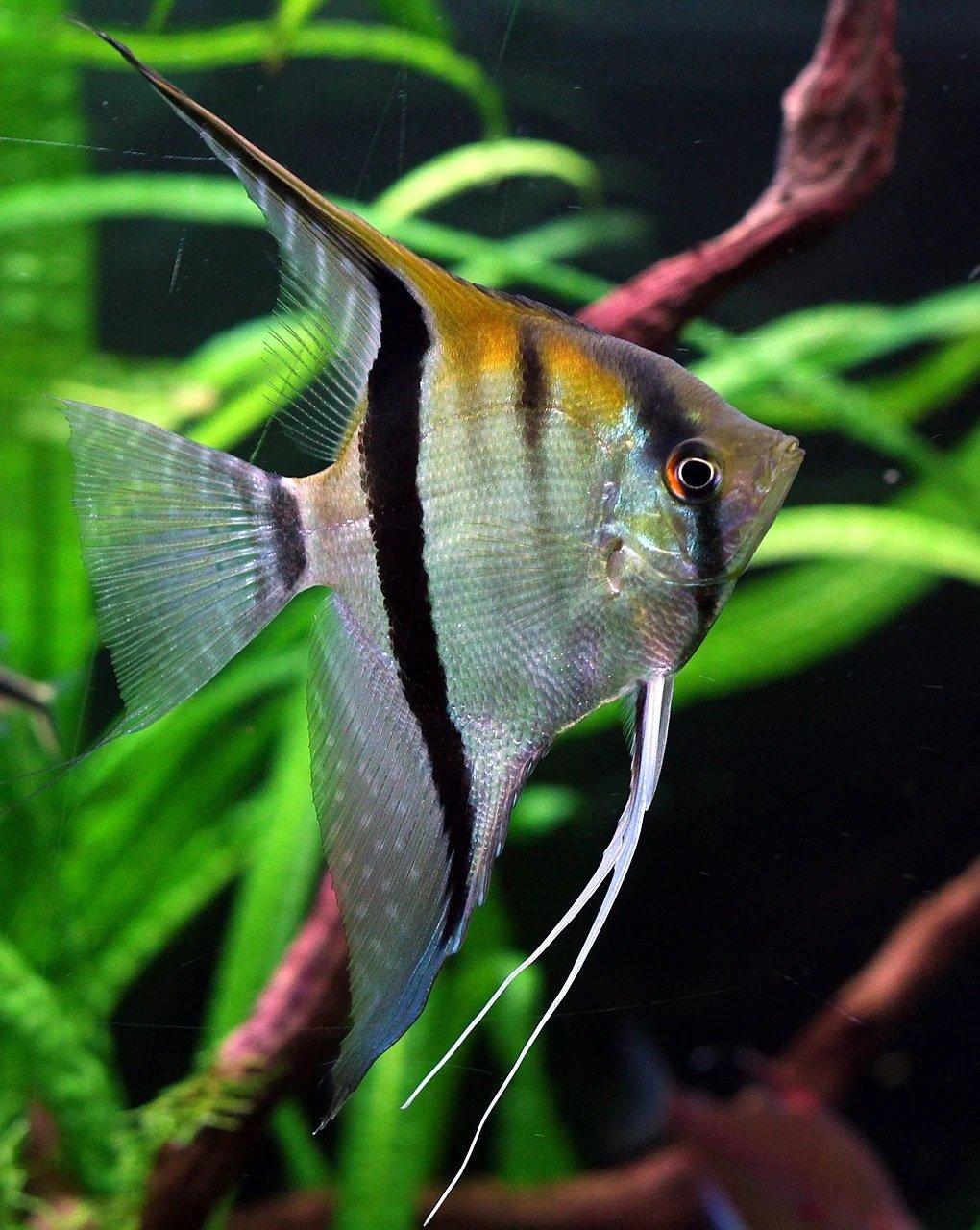 Zwierzęta domowe - quiz. Jaka to rybka akwariowa?