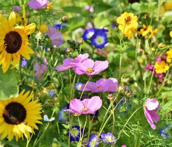 Zwierzęta i rośliny na łące - quiz