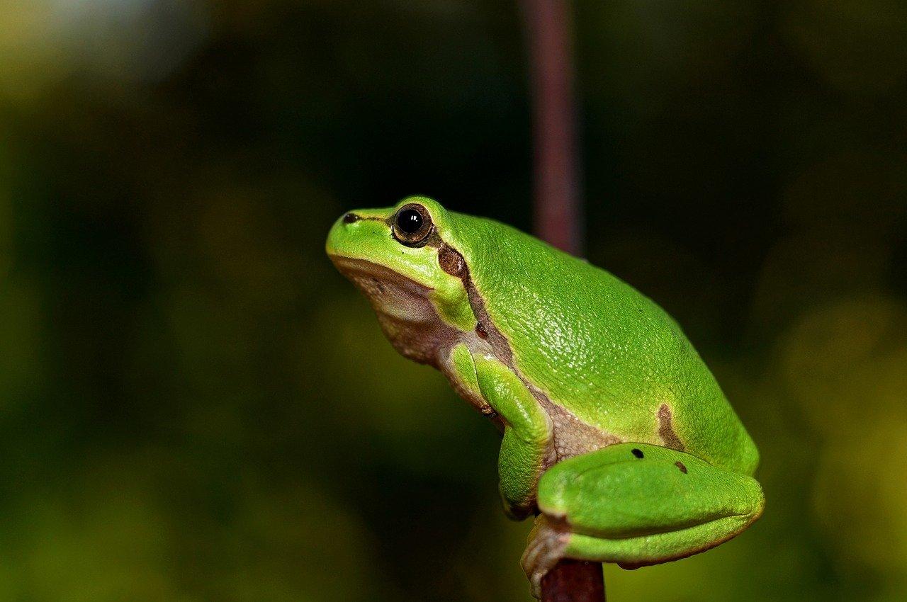 Zwierzęta chronione - quiz. Co to za płaz?