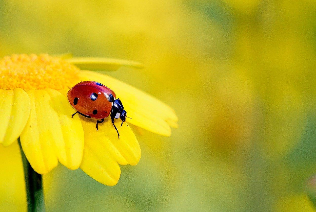 Zwierzęta i rośliny na łące – quiz