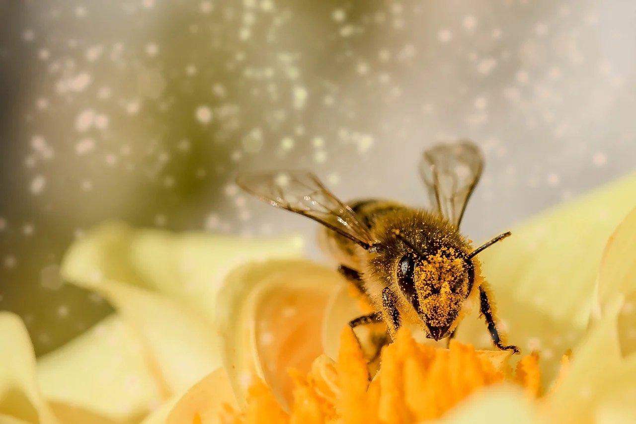 Jak robi pszczółka? Odgłosy zwierząt - quiz dla maluszków