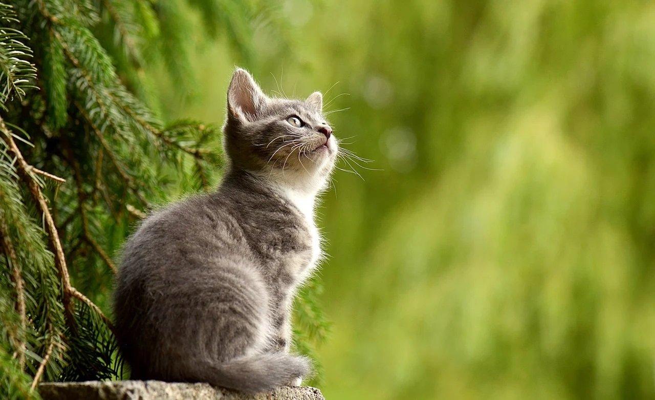 Jak robi kotek? Odgłosy zwierząt - quiz dla maluszków