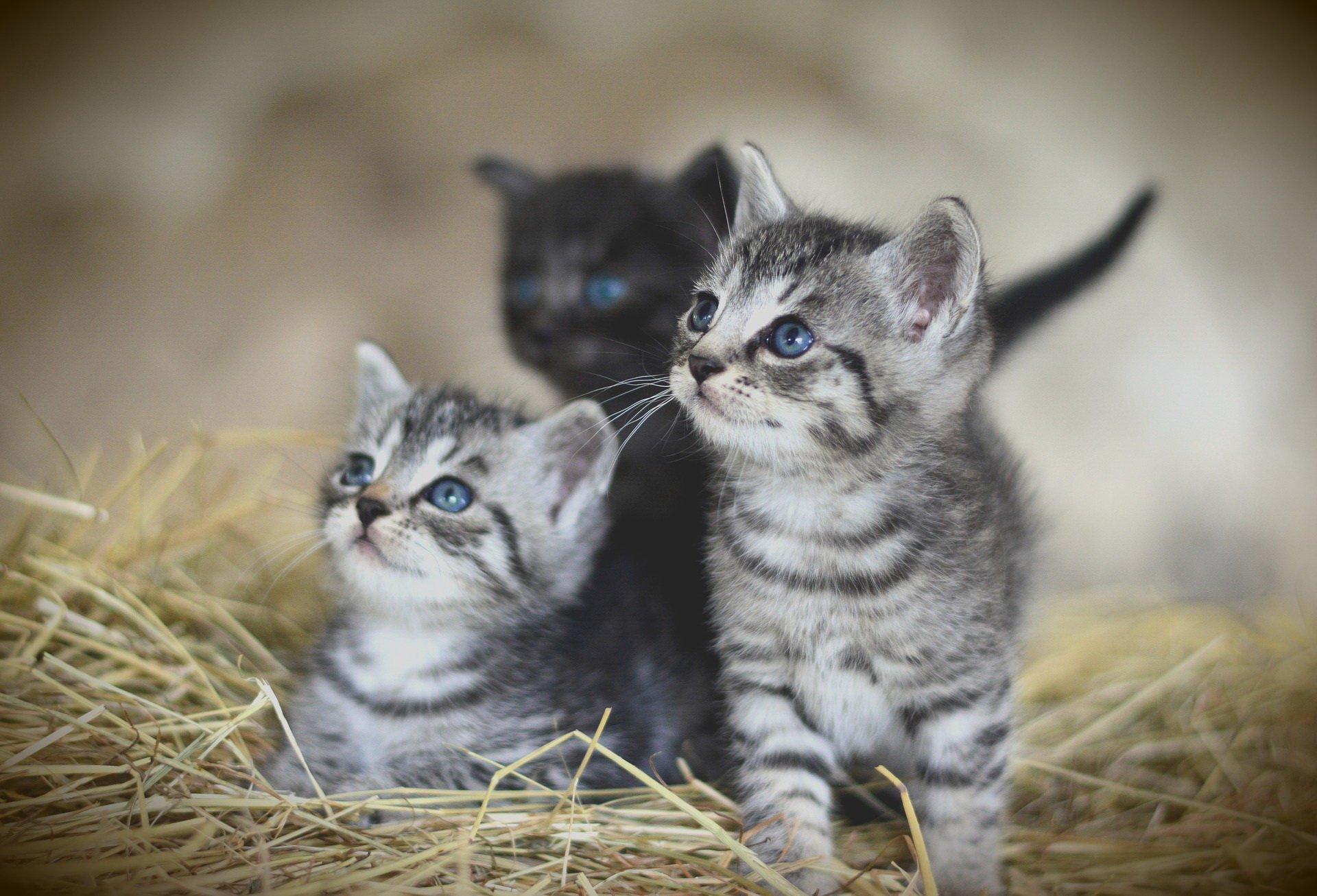 dzieci zwierząt quiz zwierzęta domowe i gospodarskie