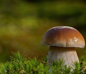 Quiz o grzybach, quiz wiedzy dla dzieci z odpowiedziami