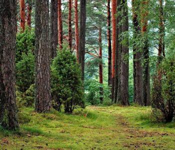 Parki krajobrazowe w Polsce - quiz