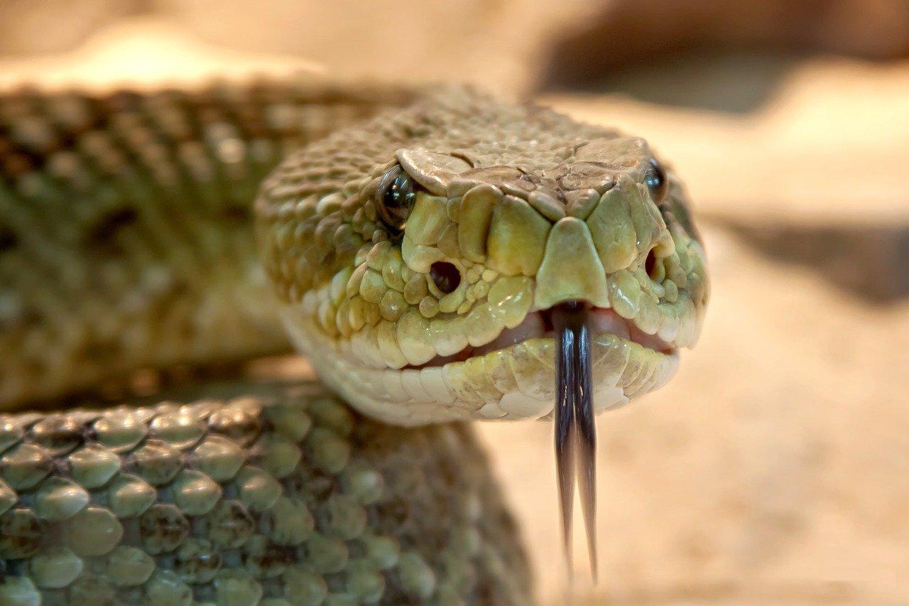 Jak robi wąż? Odgłosy zwierząt - quiz dla maluszków