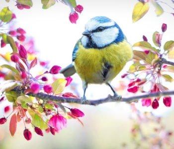 Wiosna quiz dla dzieci z odpowiedziami, quiz o wiośnie