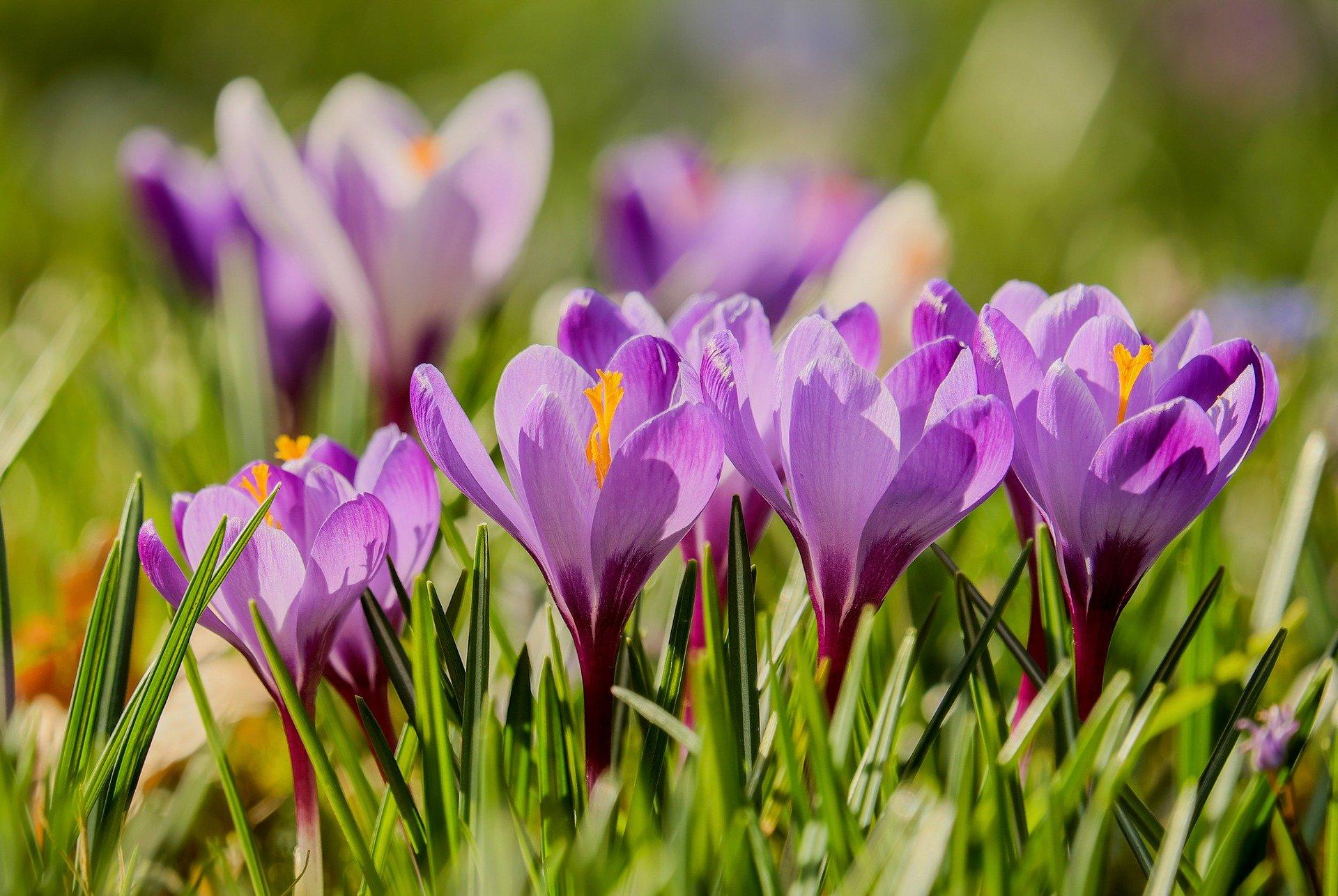Zagadki o symbolach wiosny zgadywanki dla dzieci