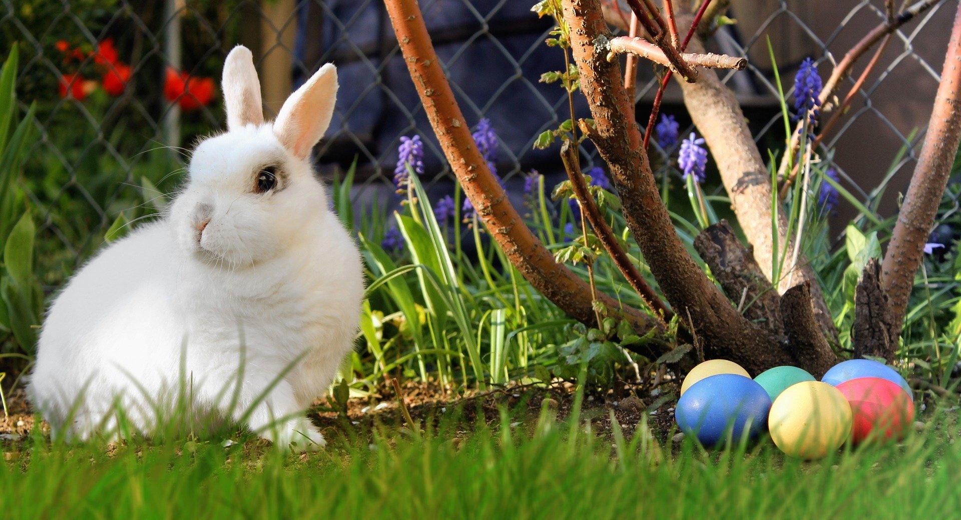 zagadki o Wielkanocy dla przedszkolaków