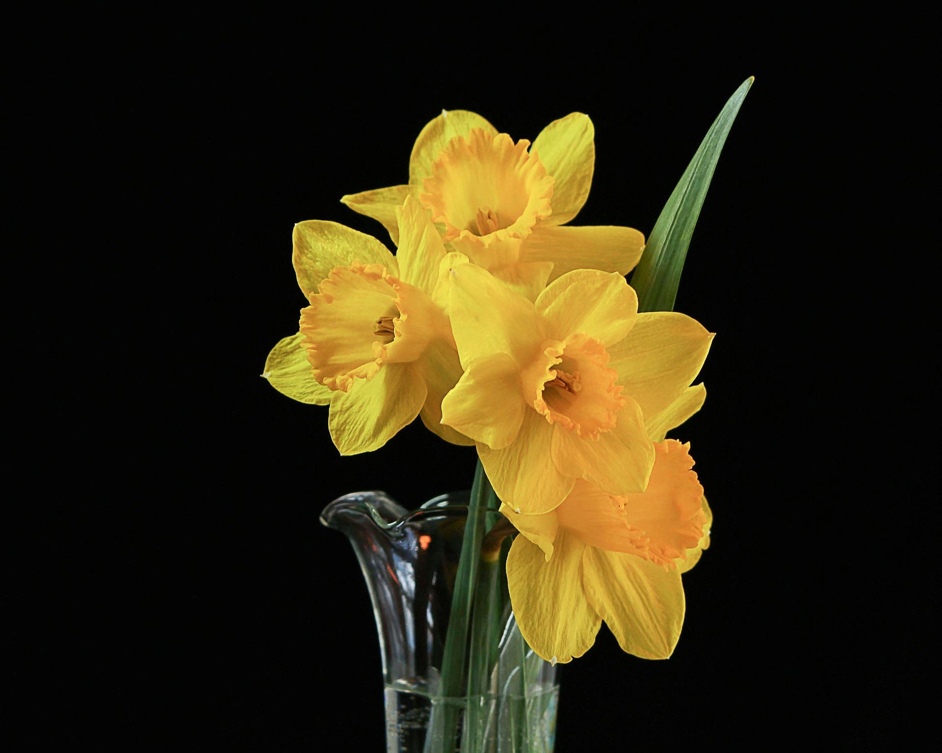 zagadki o wiośnie i wiosennych kwiatach zgadywanki z odpowiedziami