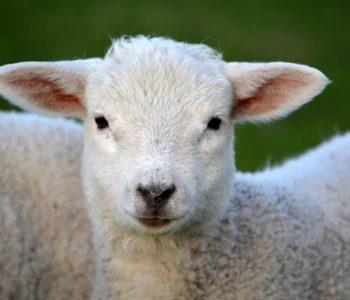 Animals - zwierzęta - quiz z angielskiego