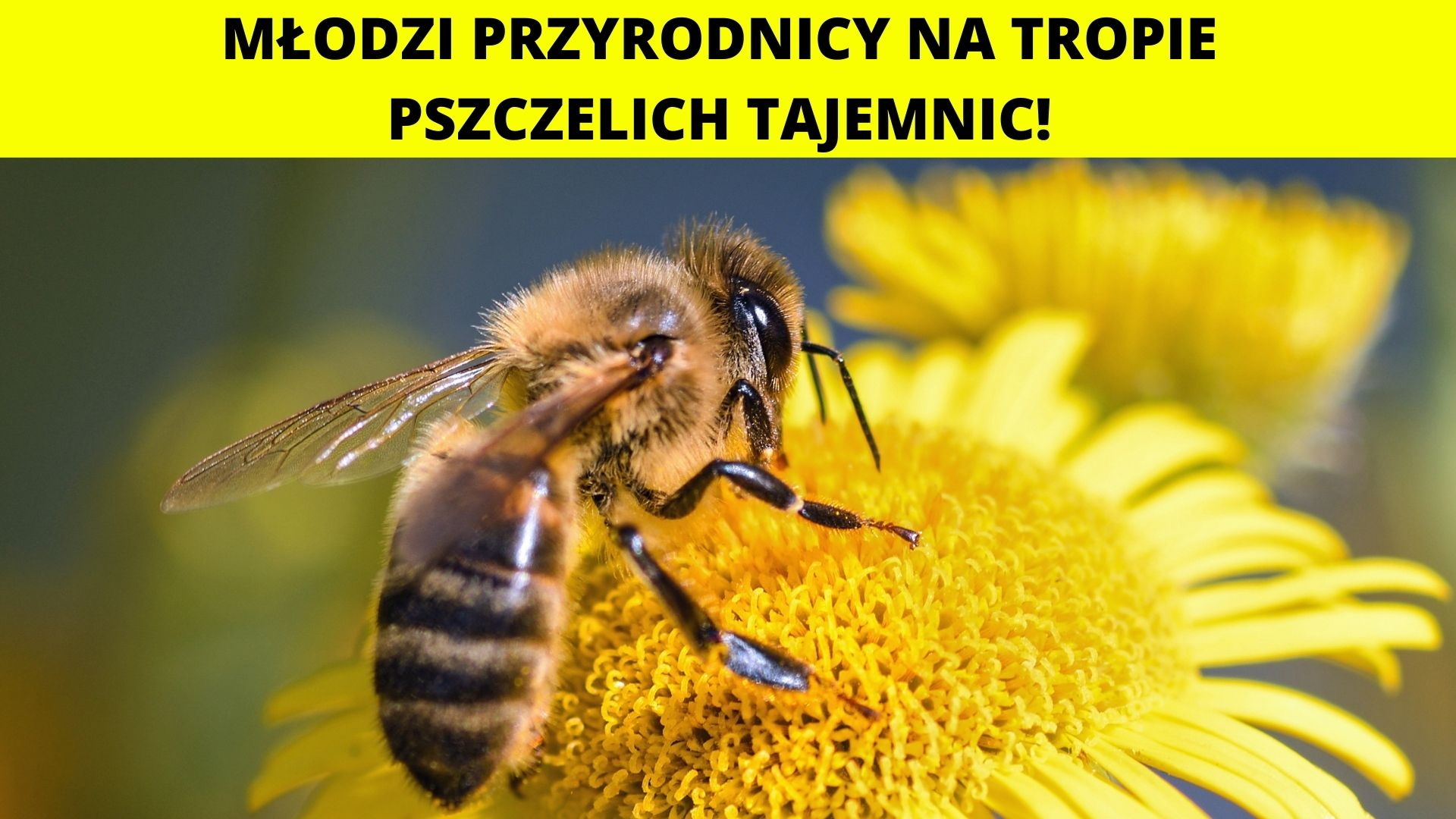 Młodzi przyrodnicy na tropie pszczelich tajemnic! Warsztaty dla dzieci