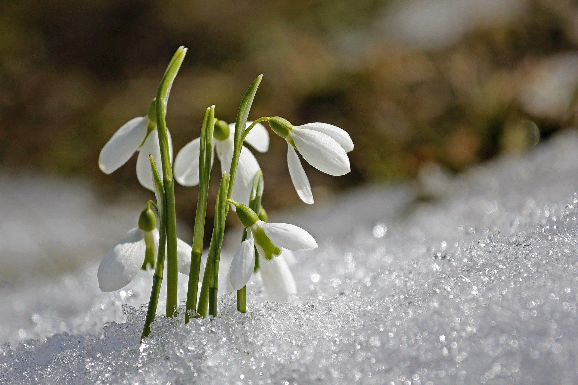Zagadki o kwiatkach wiosną