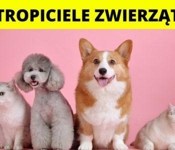Tropiciele zwierząt! – Półkolonie 2021
