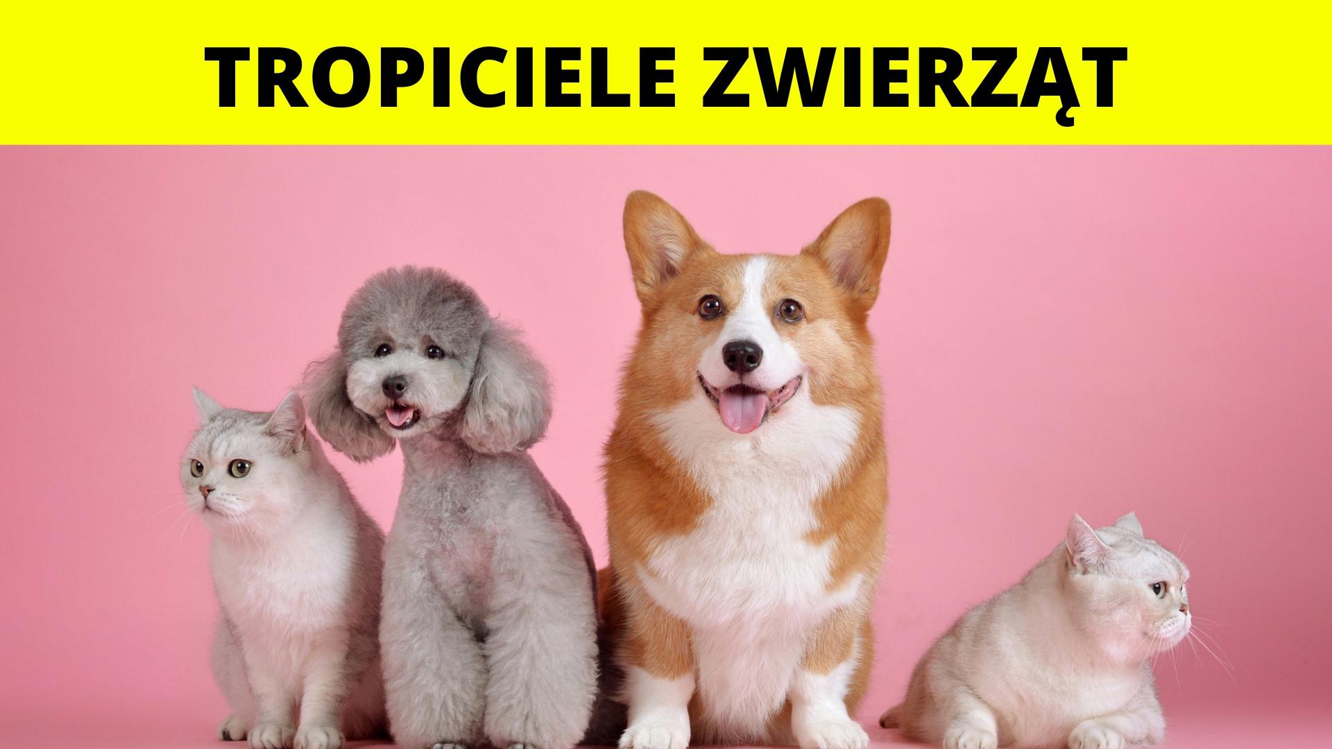 Tropiciele zwierząt! - Półkolonie 2021