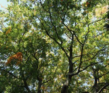 Rodzinny spacer wśród drzew w Ogrodzie Botanicznym UW