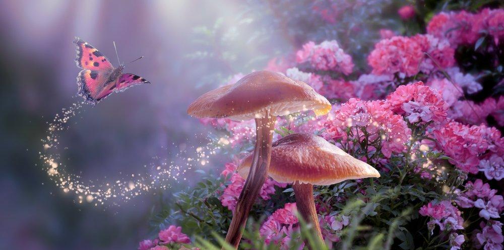 Magiczne grzyby w bajki