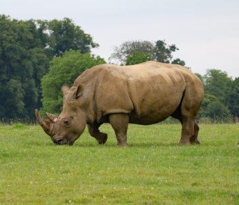 Kto z was chciałby rozweselić pechowego nosorożca? – quiz