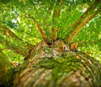Drzewo do samego nieba – quiz