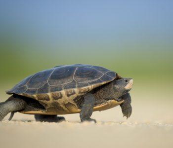 Międzynarodowy Dzień Różnorodności Biologicznej i Dzień Żółwia w Palmiarni Poznańskiej