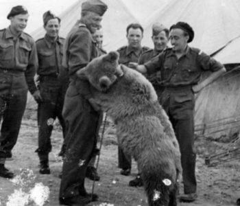 Dziadek i niedźwiadek - quiz