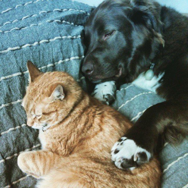 Darmowa bajka na dobranoc o zwierzętach